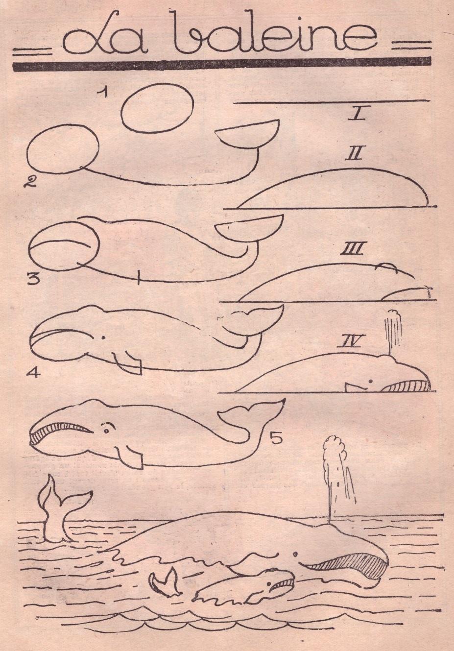 Baleine apprendre dessiner une baleine cours de dessin - Dessiner gratuitement ...