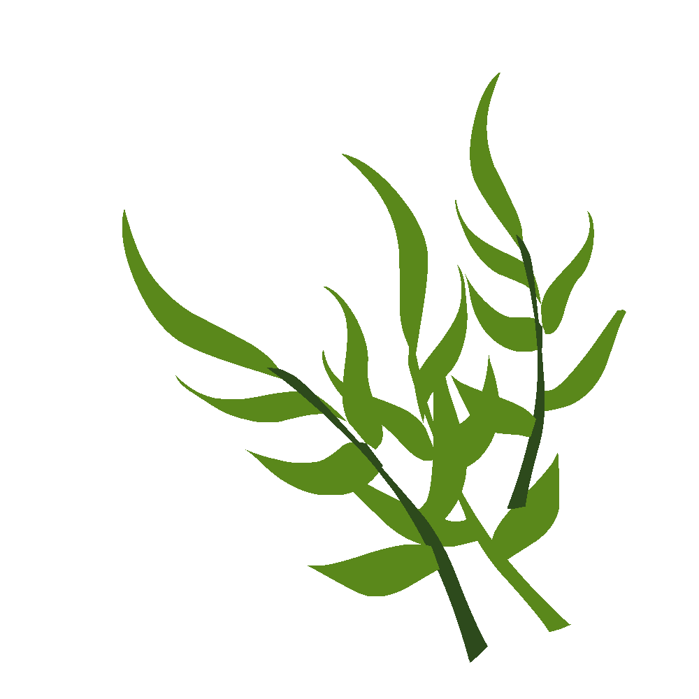 Plantes images en png fond transparent tests jeux for Plante en ligne