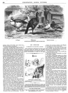 Les nouvelles acquisitions du Jardin d'acclimatation: Oie d'Égypte; Pénélope Marail; canards de là Caroline. 1870
