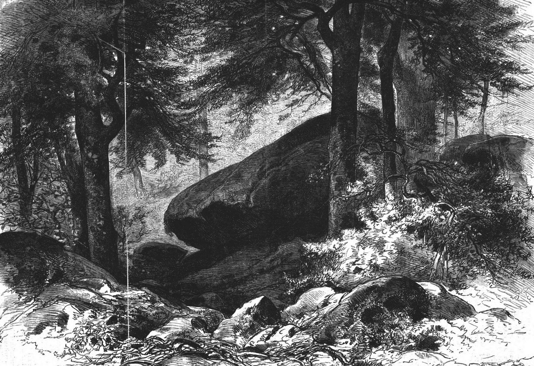 Un coin de forêt, étude d'après nature par M. Sauvageot. Gravure 1874