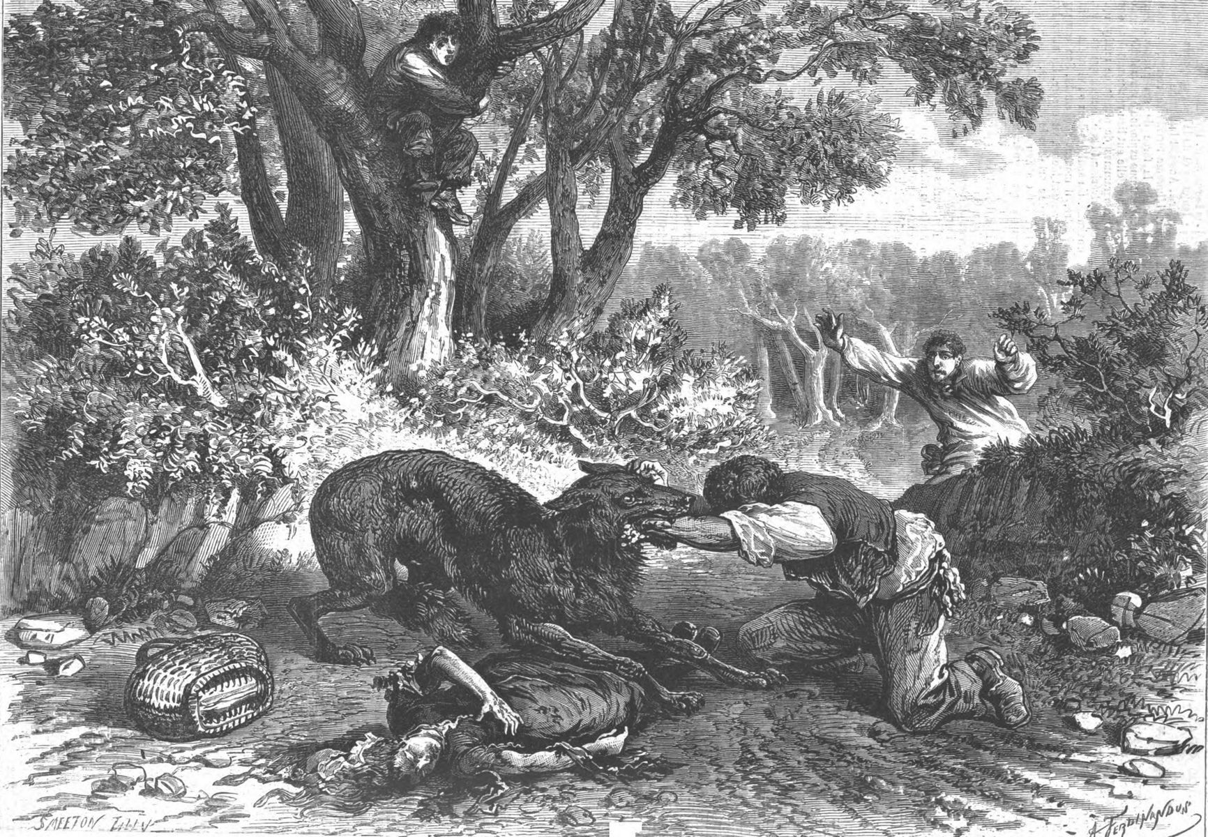 Le drame de la Rochette (Charente) : un loup enragé, trois victimes.