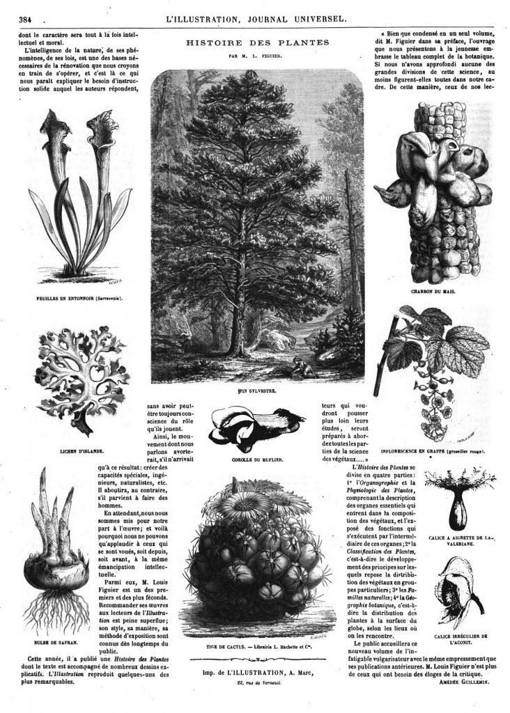 Histoire des plantes (10 gravures)