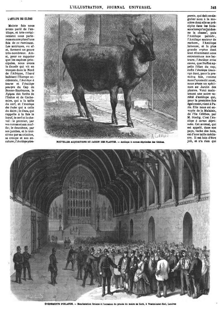 ÉVÉNEMENTS D'IRLANDE. - Manufestation feniane à l'occasion du procès du maire de Cork, à Westminster-Hall, Londres 1869