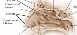 QCM ATSEM Anatomie-physiologie. ATSEM (Agent Territorial Spécialisé des Ecoles Maternelles) est un concours de la fonction publique territoriale